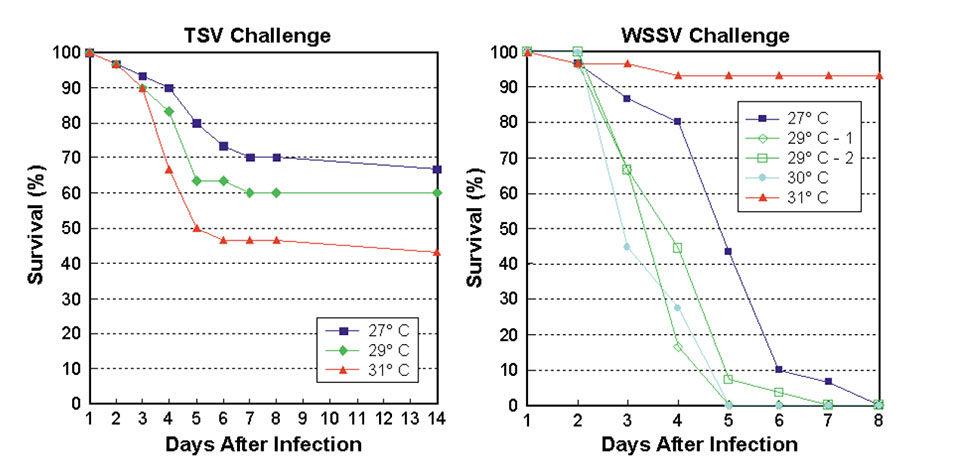 shrimp disease resistance