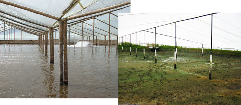 Article image for Greenhouse systems a promising technique against WSSV in Ecuador