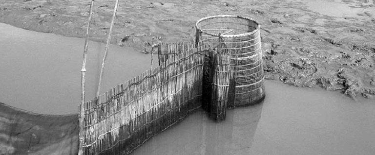 Article image for Coastal aquaculture supports varied systems in Haiphong