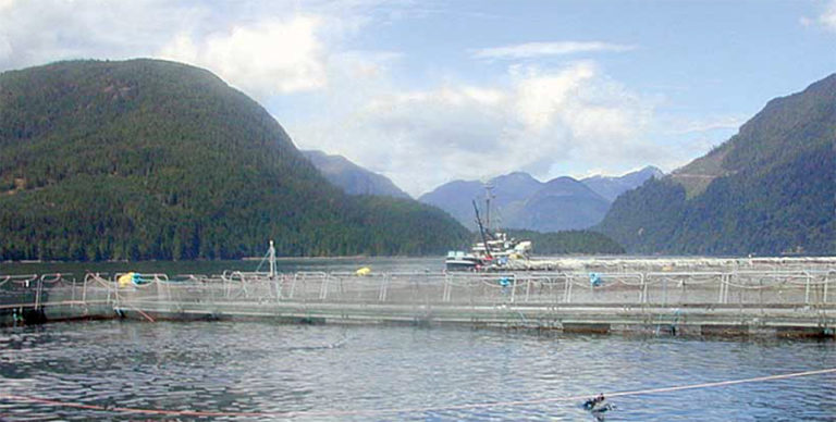 Article image for Best management practices for salmon feeds
