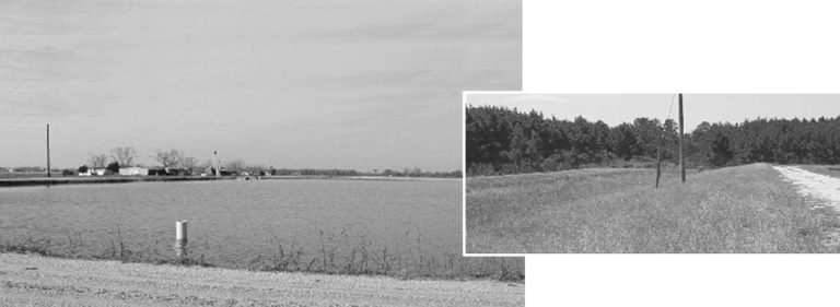 Article image for Vegetated strip evaluated for storm water effluent treatment in catfish pond