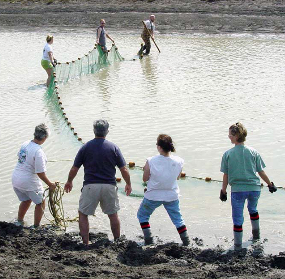 Freshwater prawn culture