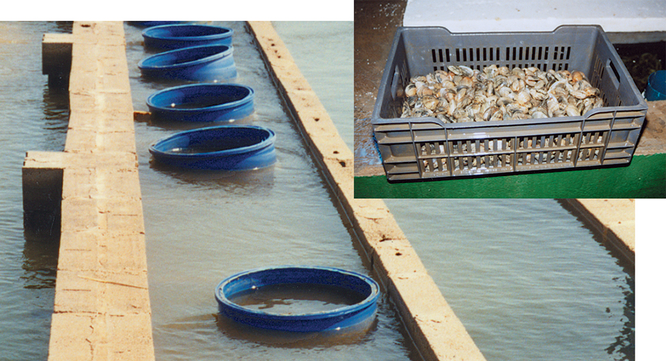Food safety issues in aquaculture