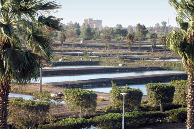 Article image for Tilapia production rising in Africa