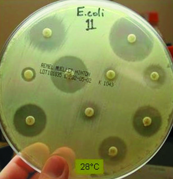 Article image for Aquaculture working group standardizes methods for bacteria testing
