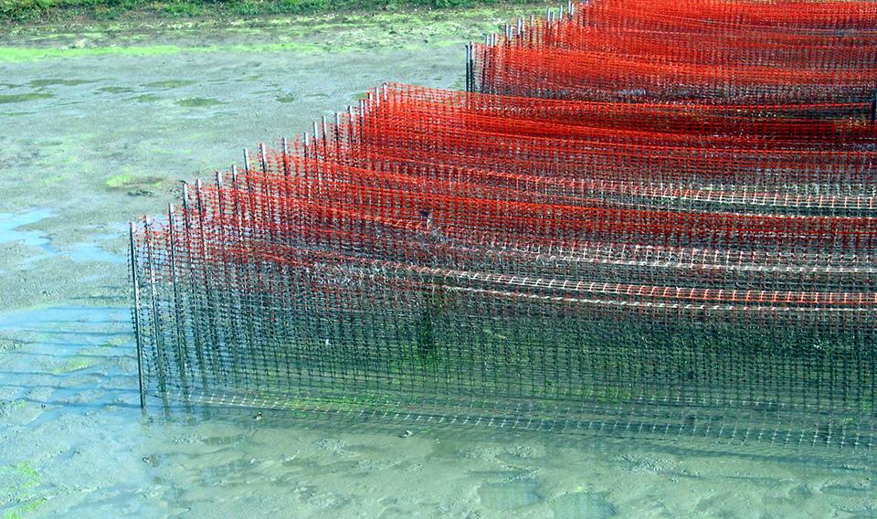 Freshwater prawn feed