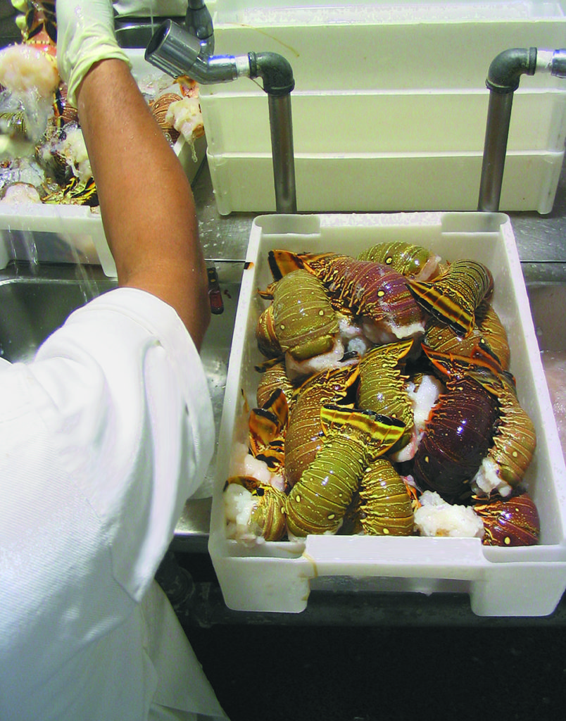 Article image for Chlorine dioxide offers seafood treatment alternative to aqueous chlorine