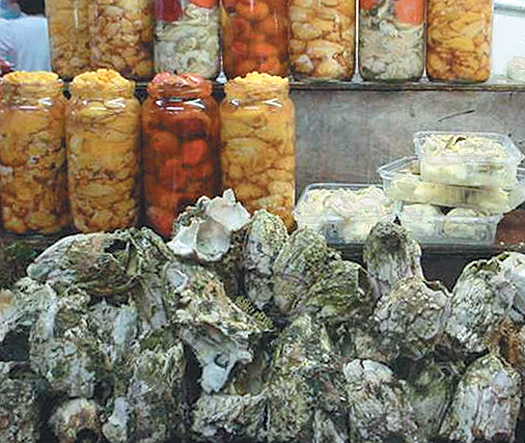 Article image for Aquaculture diversification in Chile: Potential of giant barnacles