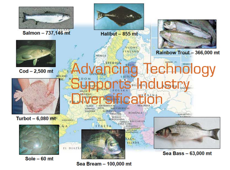 Article image for A review of European marine finfish hatcheries
