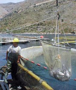marine finfish hatcheries