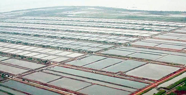 Article image for Shrimp farming in Indonesia