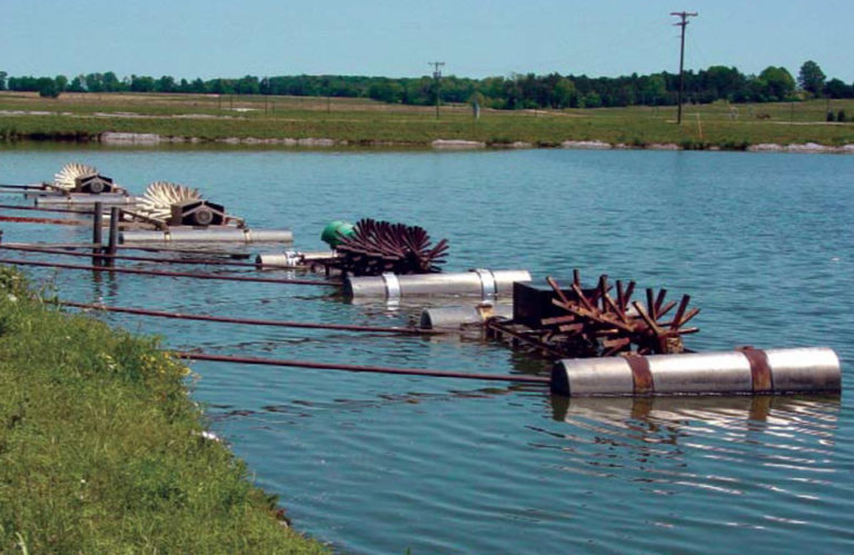 Article image for Limits of catfish production in ponds