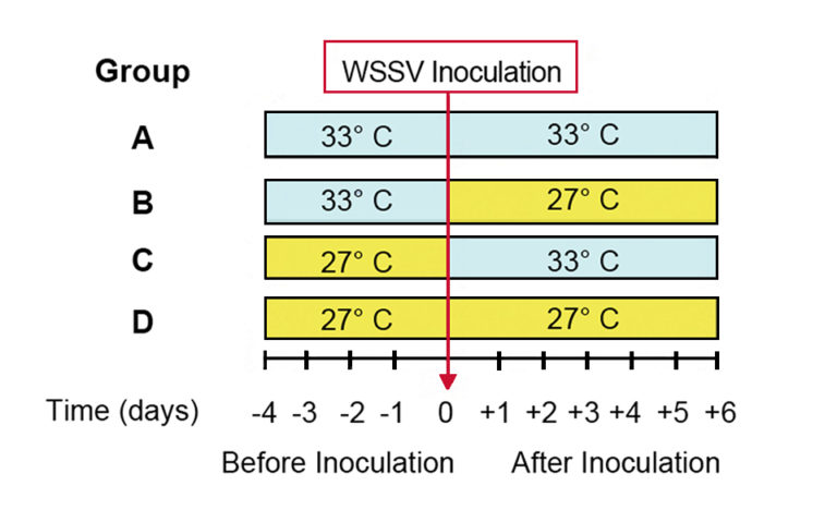 Article image for High water temperature affects WSSV management