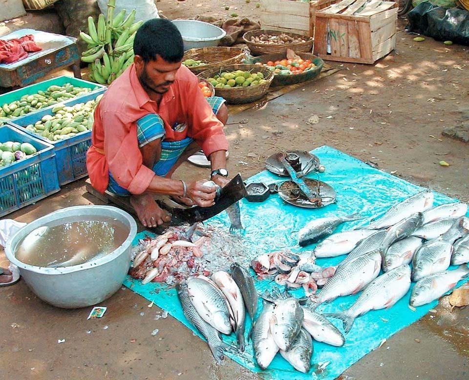 Indian carp