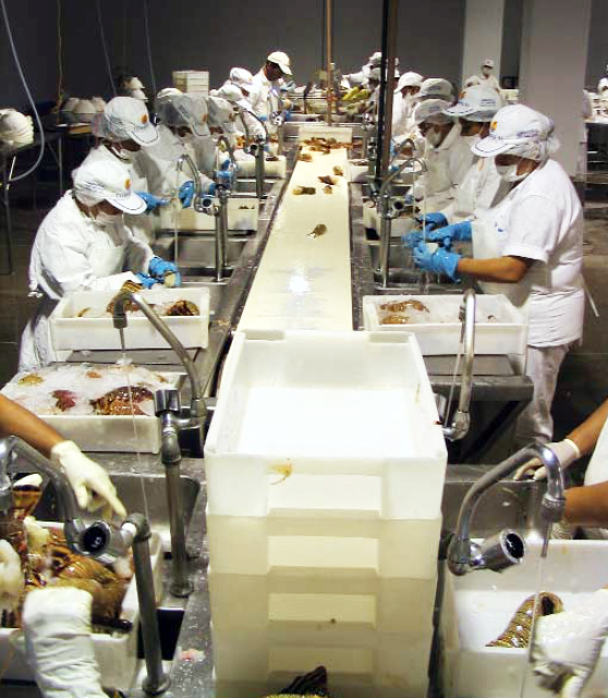 Article image for ISO 22000:2005 food safety system integrates HACCP