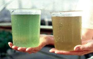 Microbial flocs