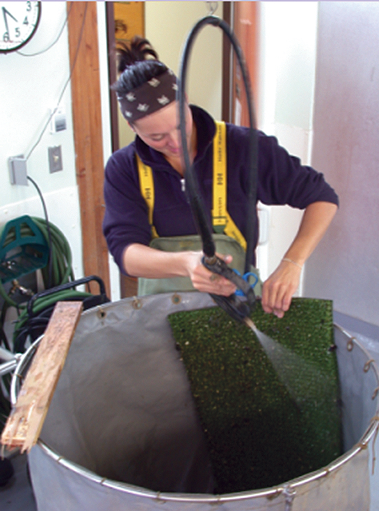 Article image for Simple solution: Turf mats collect soft-shell clam spat