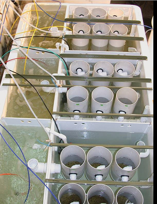 Article image for Formulated diets for bivalve spat replace algae in hatchery trials