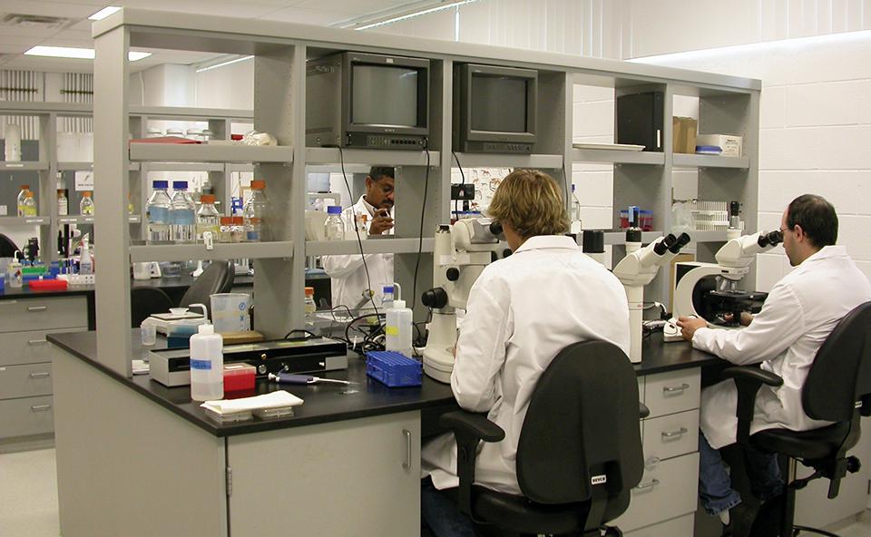 Article image for Genetics contribute to profitable shrimp production