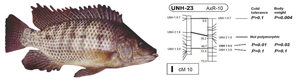 Article image for A look at aquaculture genomics