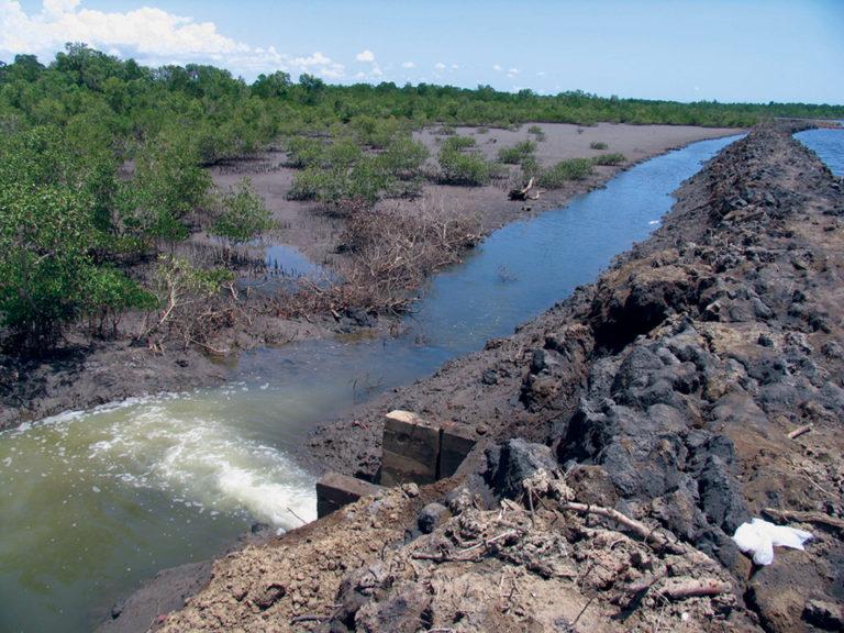 Article image for Best management practices minimize impacts of aquaculture effluents