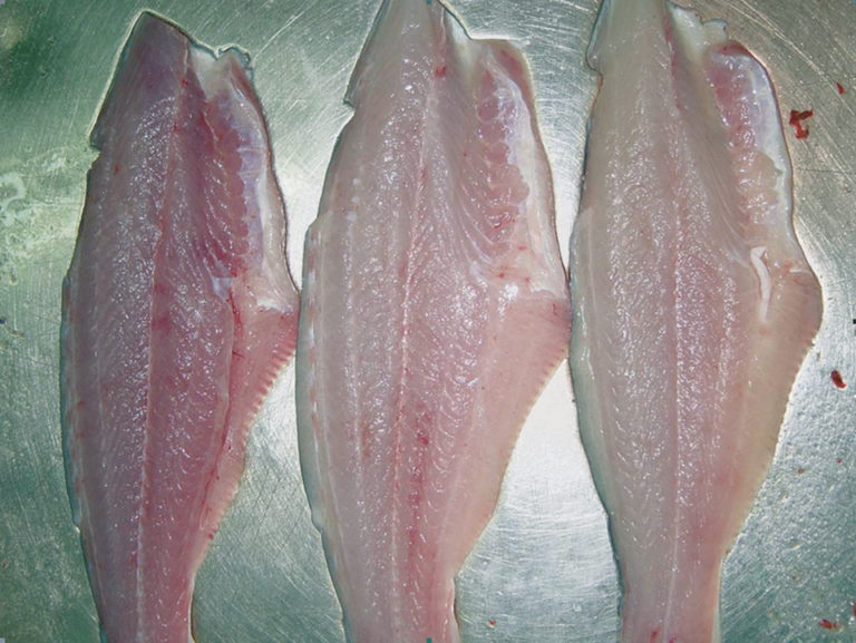 Article image for QIM method scores quality, shelf life of pangasius fillets
