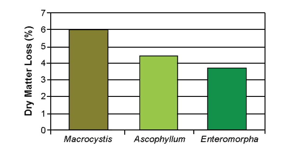 Enteromorpha