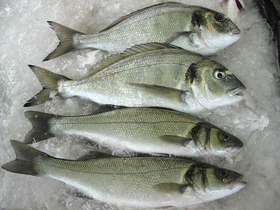 sea bream sea bass