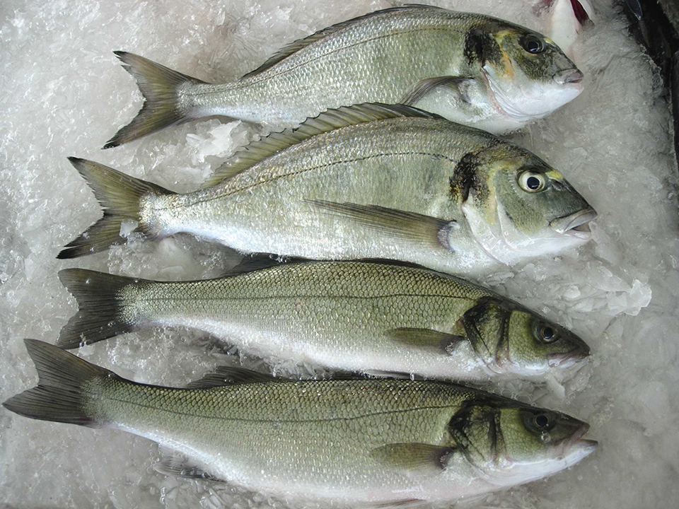 Article image for A quality project for sea bream, sea bass