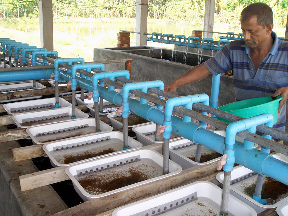 polyculture in Bangladesh