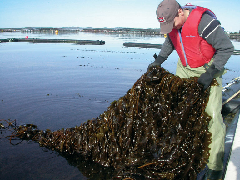 Article image for Enhanching sustainability with integrated multitrophic aquaculture