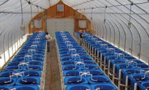 USDA marine aquaculture center