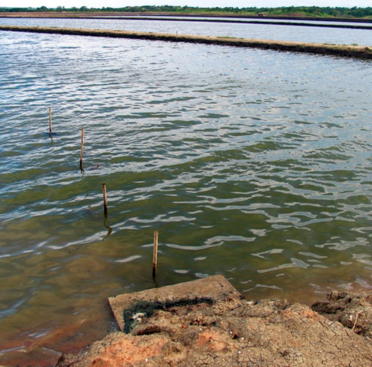 Article image for Nitrification an important process in aquaculture