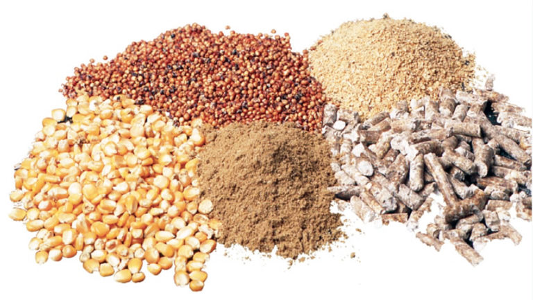 Article image for Increased ethanol production shifts feed industry grain use
