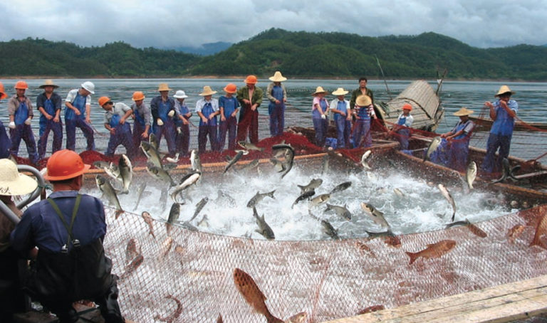 Article image for Freshwater fish culture in China