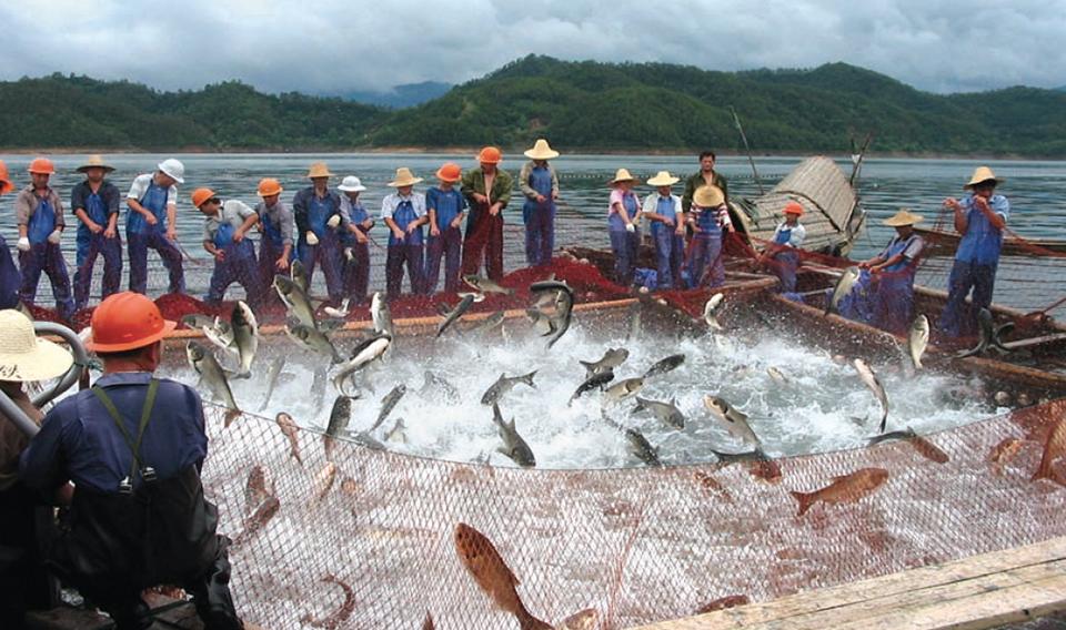 Freshwater carp - photo#47