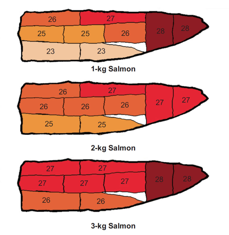 Article image for 'Quality map' for coho salmon fillets identifies color, lipid distribution