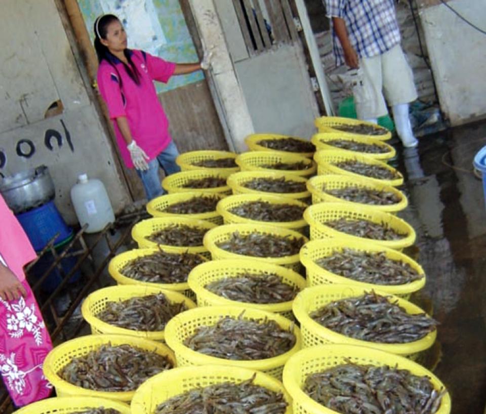 Article image for Thailand's white shrimp revolution