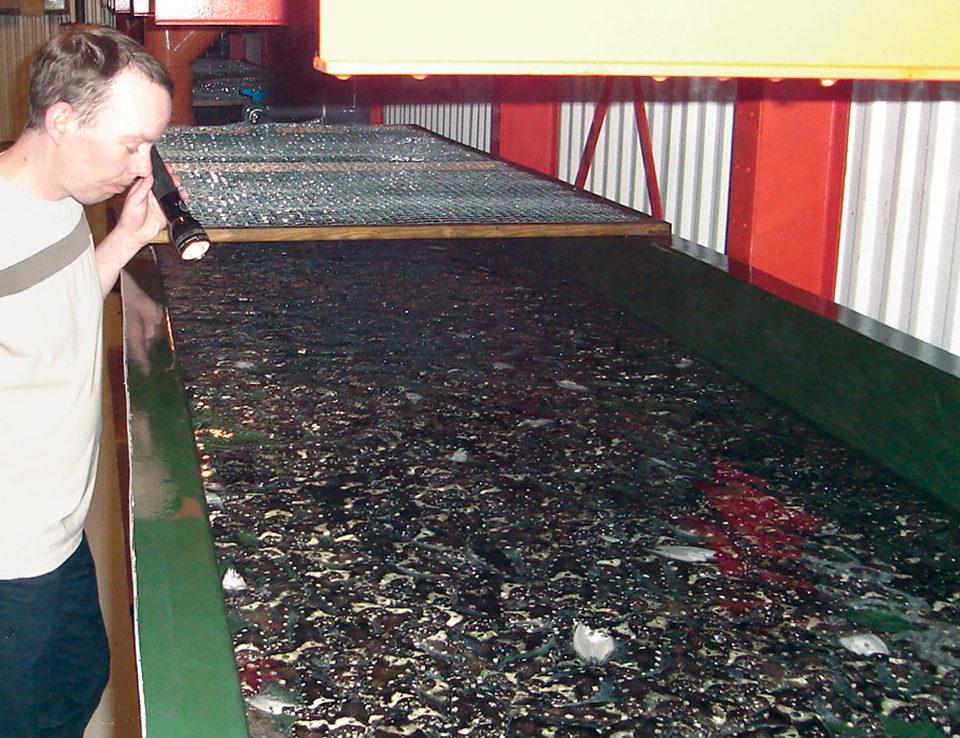 Industrial aquaculture parks