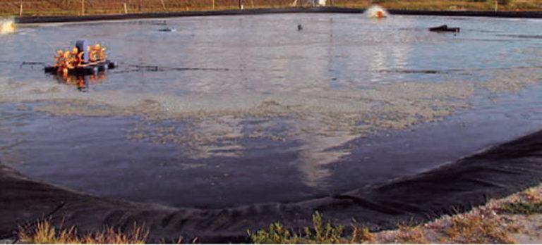 Article image for Probiotics found ineffective against Vibrio harveyi in limited-exchange shrimp pond survey