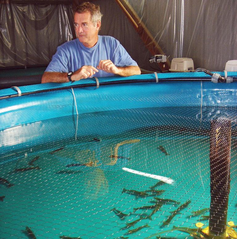 Article image for Blue shrimp quarantined in New Caledonia genetic variability program