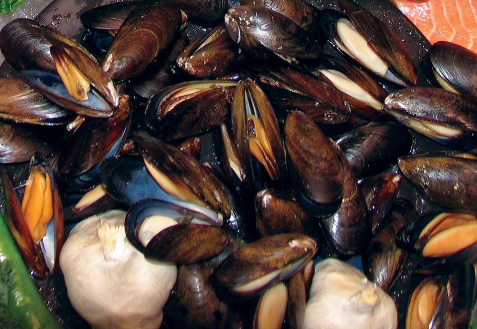 Article image for Pathogenic Vibrios in shellfish