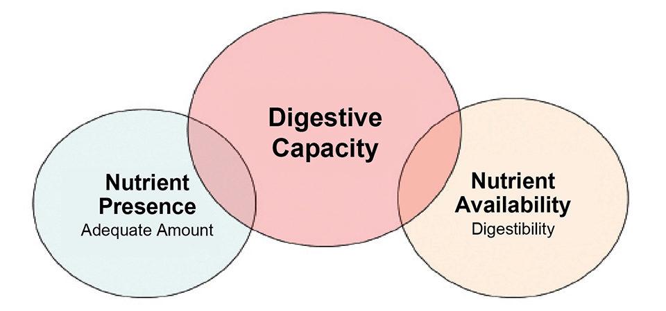 digestive capacity