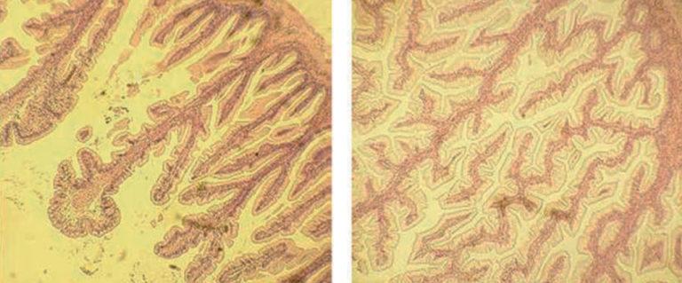 Article image for Nucleotide supplementation improves survival, production of white shrimp, tilapia in trials