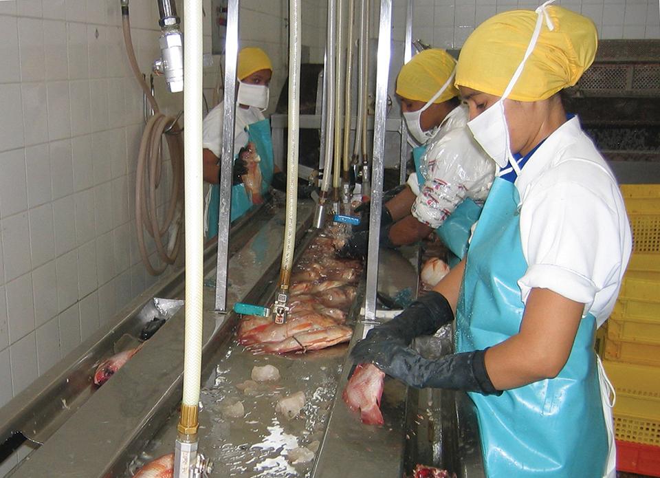 Article image for Food safety, quality control in tilapia products