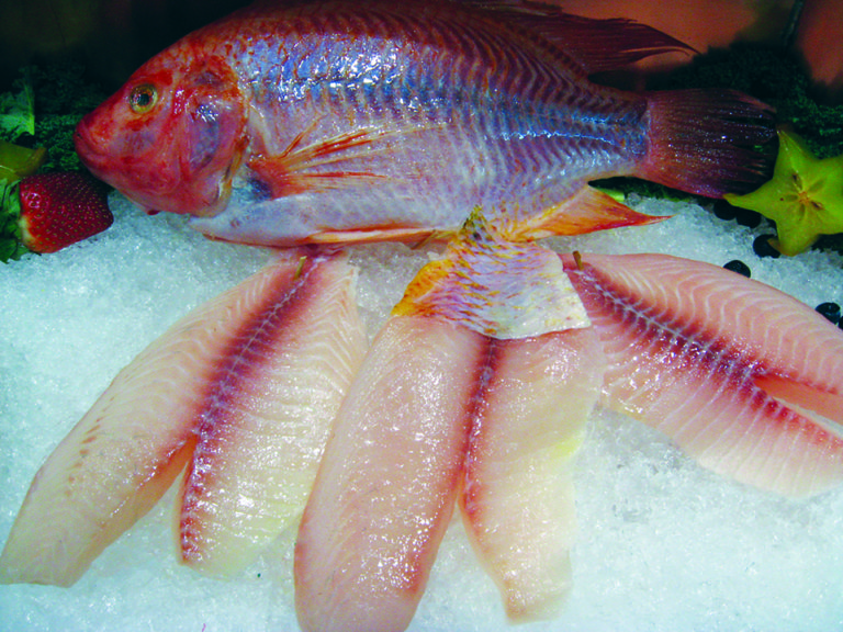 Article image for DNA profiling verifies origins of seafood products