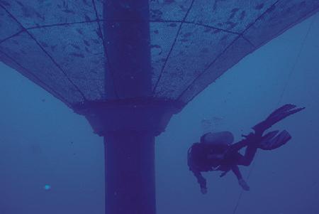 Article image for Net impacts: An argument for open-ocean aquaculture