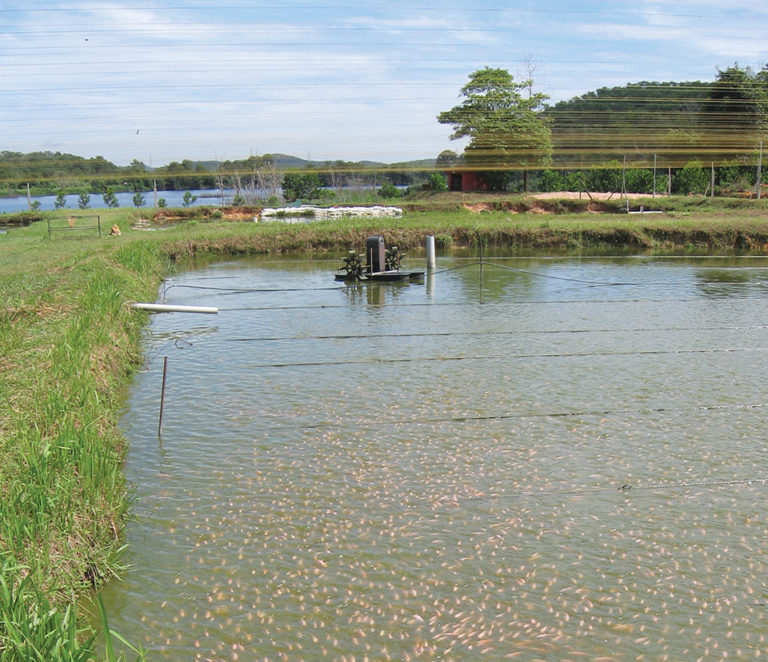 Article image for Quality control measures improve tilapia production chain in Latin America