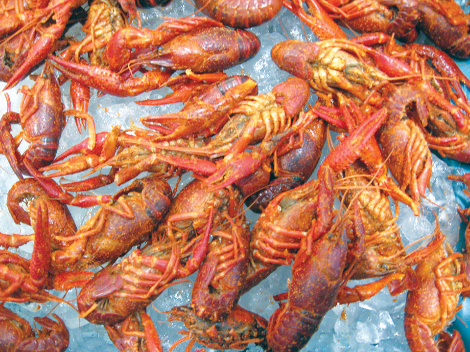 Article image for Solutions to microbiological challenges in crawfish processing