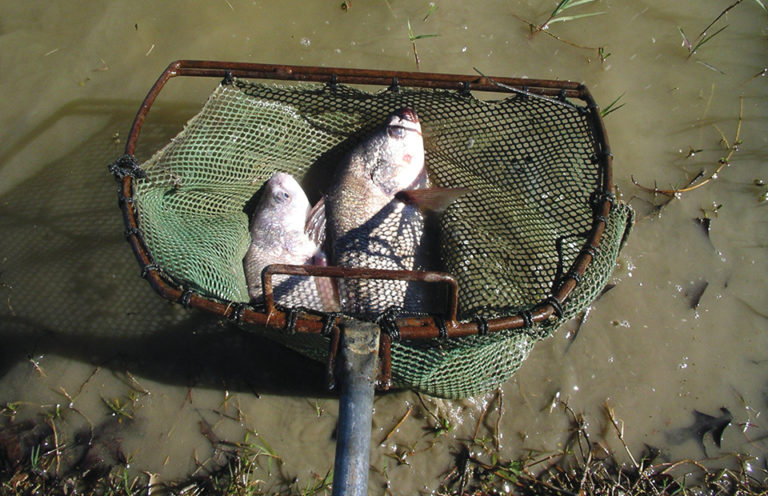 Article image for Snail control in fish ponds